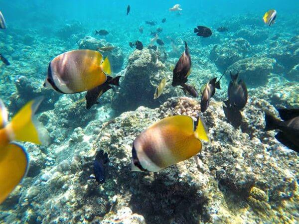 Les fonds marins d'Amed à Bali