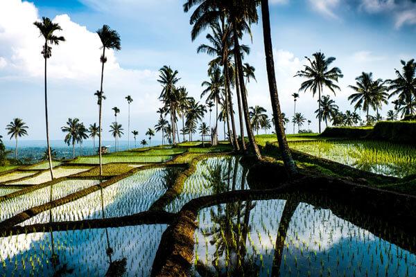 Les rizières de Tetebatu, à Lombok