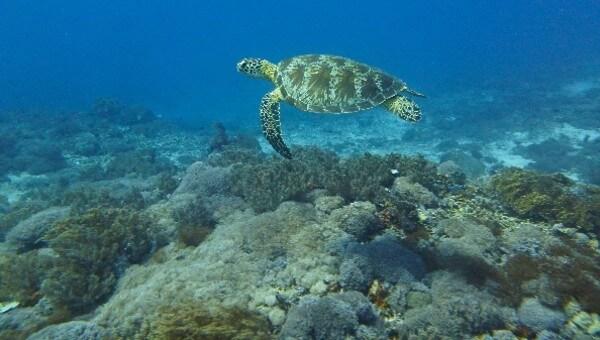 Une tortue de mer aux abords de Gili Air
