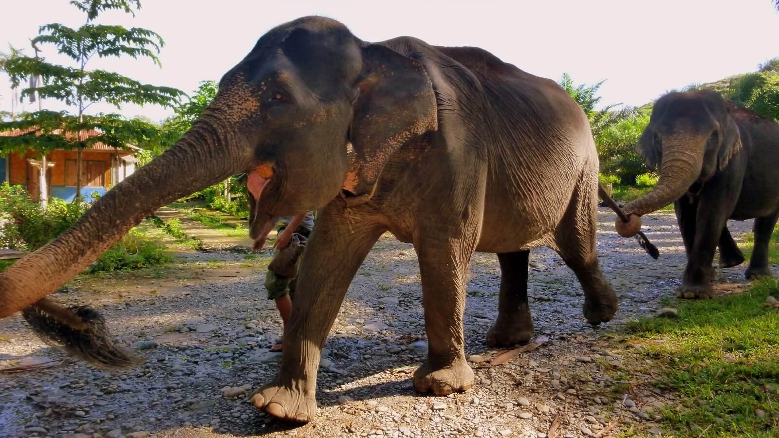 Une idée de circuit dans la jungle de Sumatra