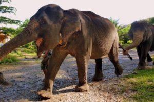Bouton vers notre idée de circuit dans la jungle de Sumatra