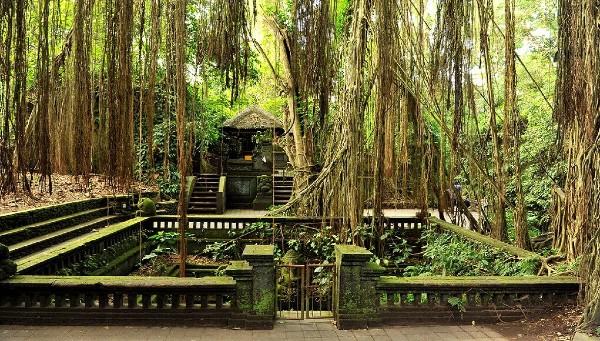 Forêt des singes à Ubud, à Bali