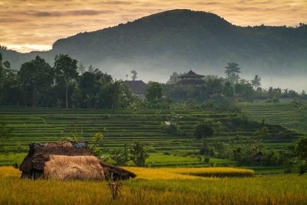 La vallée de Sidemen, à Bali