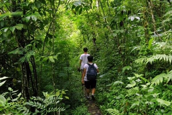 Des randonneurs dans la jungle près de Munduk, à Bali
