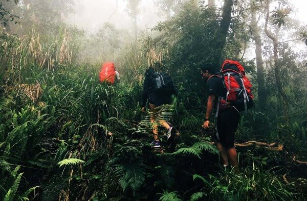 La jungle sur les pentes du volcan Rinjani
