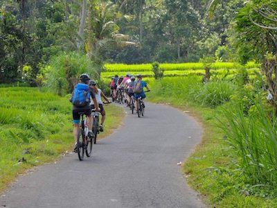 Des touristes à vélo dans des rizières