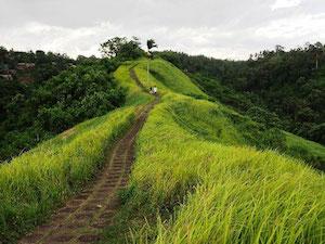 Des touristes en balade à pied à Lombok en Indonésie